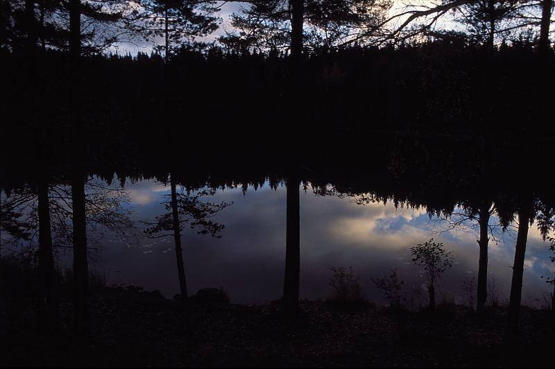 dark holy autumn forest4 800